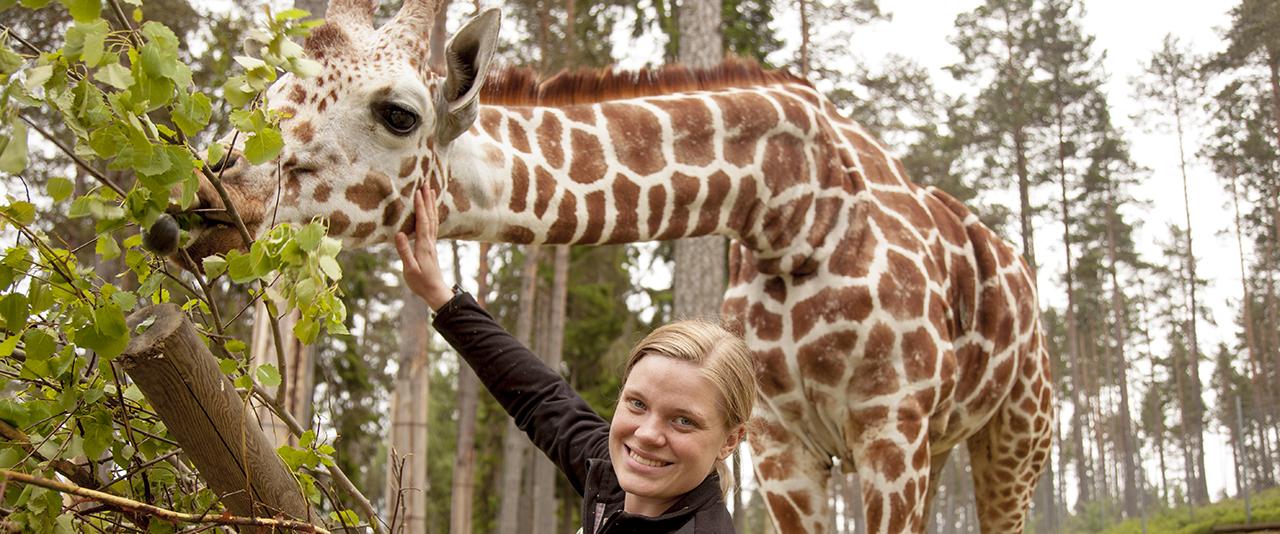 Giraff 2 top desktop