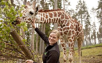 Giraff 446 desktop