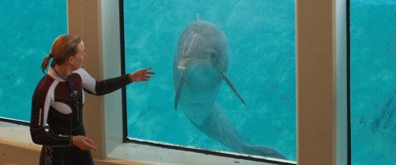 biljetter delfinshow kolmården