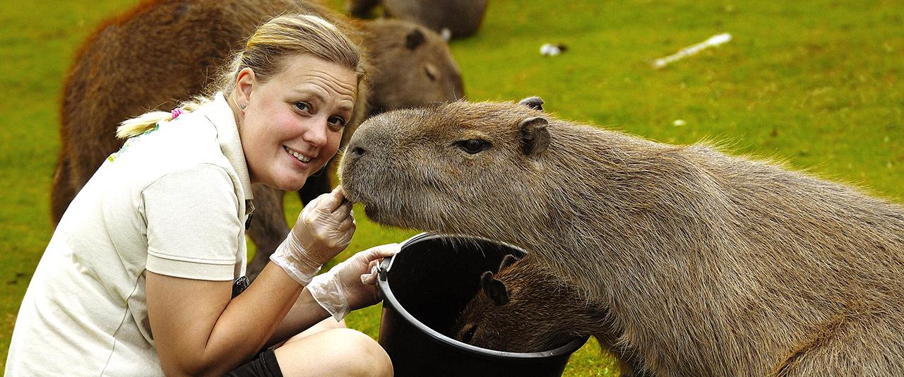 Kapybara 030a top desktop