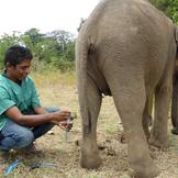 Elefantprojekt galleri thumb square