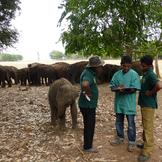 Elefantprojekt galleri1 thumb square
