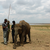 Elefantprojekt galleri2 thumb square