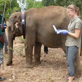 Elefantprojekt galleri3 thumb square