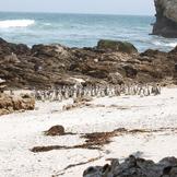 Pingvin kis3 thumb square