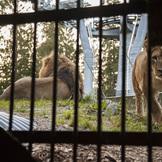 Safari camp 200 thumb square