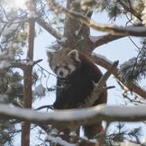 R d panda 2015 01 23 003 thumb square