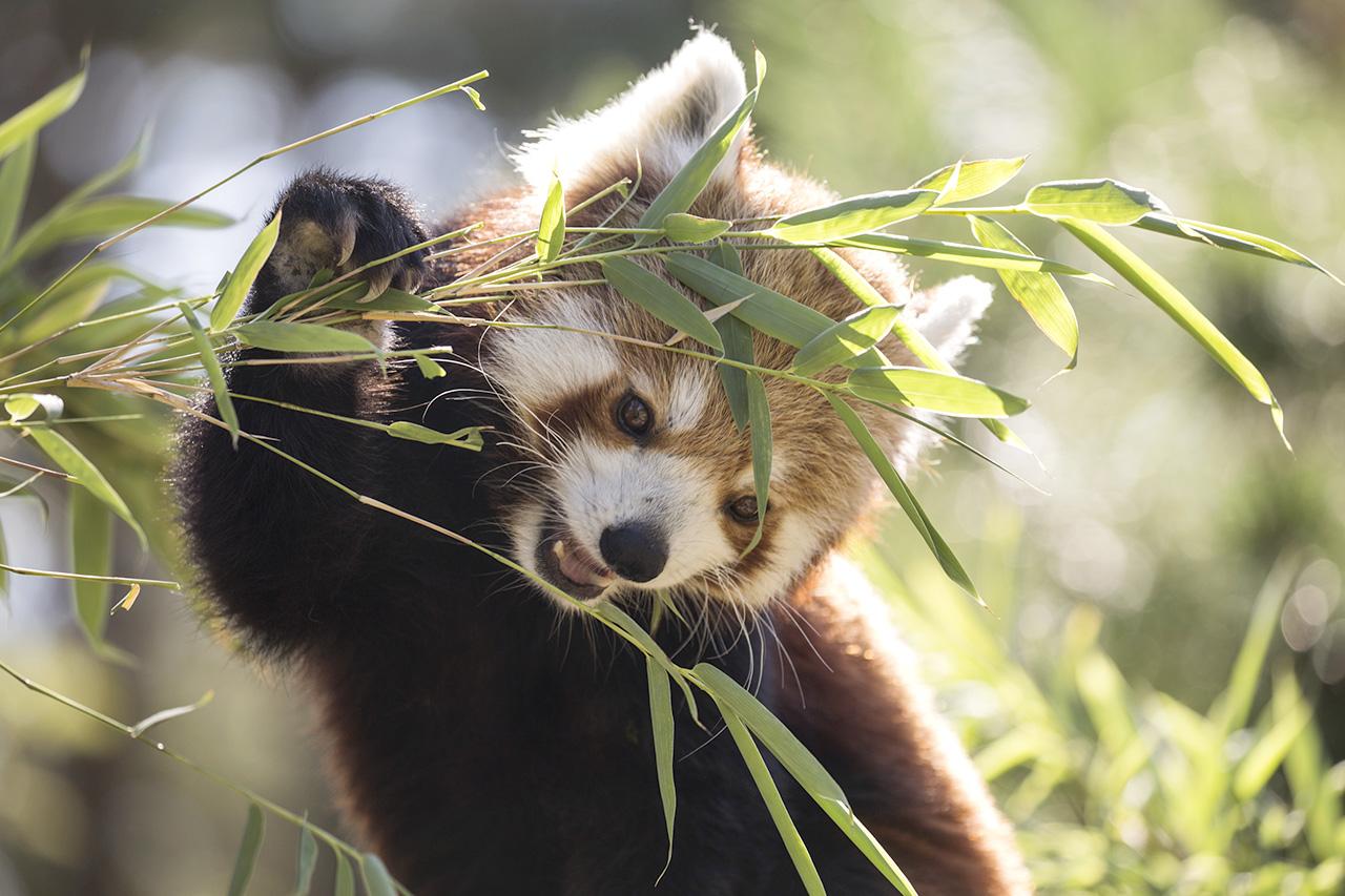 R d panda 2016 08 31 008