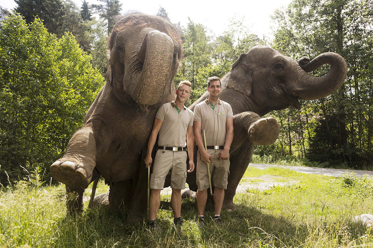 Elefant 2016 06 23 046