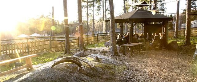 Safari camp top mobile