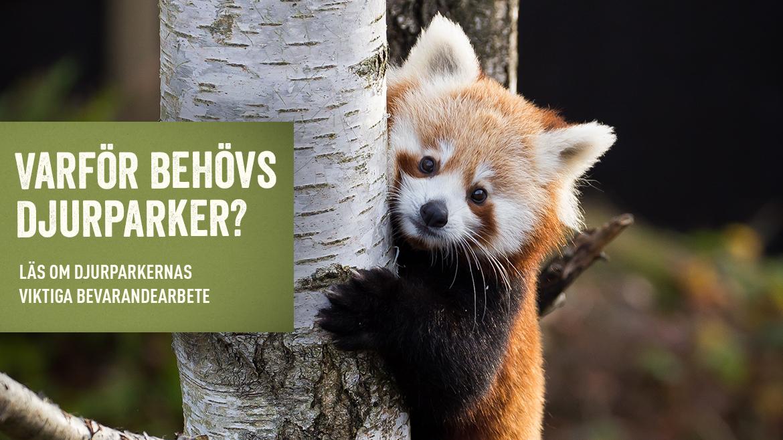Pandabild desktop