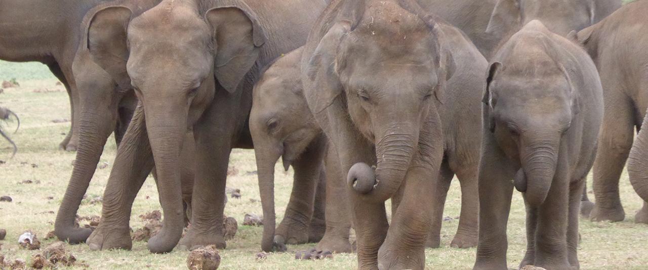 Elefant 1280x534 top desktop