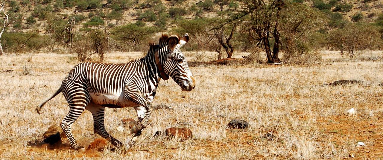 Zebra 1280 top desktop