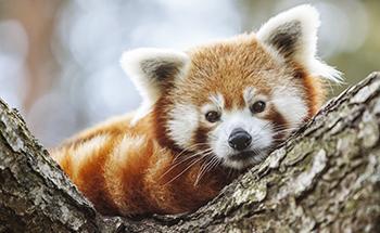R d panda 2014 09 17 002 desktop