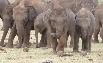 Elefant 350x215 desktop