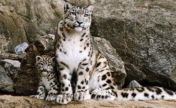 Sn leopard 027 desktop