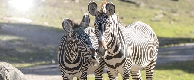 Kolmarden ger narhet till djuren